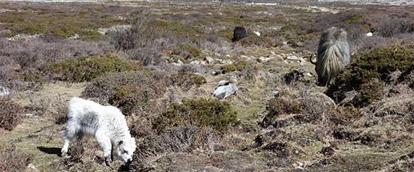 sagarmatha-national-park-5